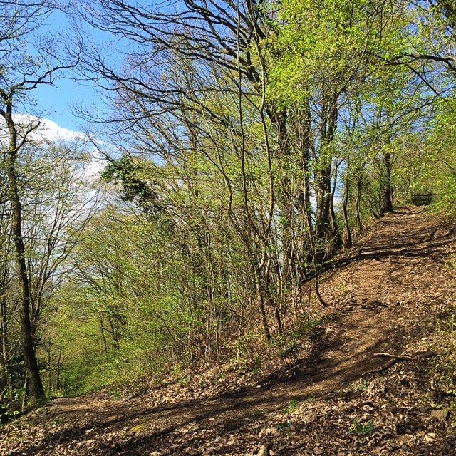 Waldweg im Ennert