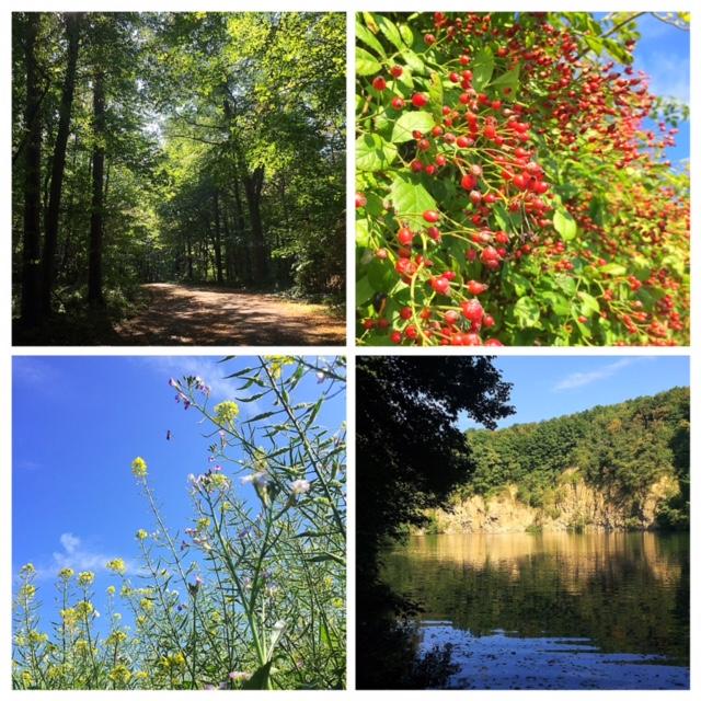 See, Wald und Wiesen bei uns um die Ecke